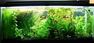 55 Gallon Fish Tanks
