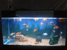 Fish-Tank-Kit