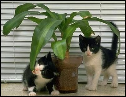 houseplants that are poisonous for your pet felines. Black Bedroom Furniture Sets. Home Design Ideas