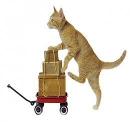 Pet-Food-Delivery