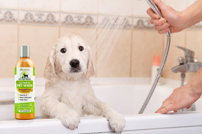 how to naturally clean a dog& 39