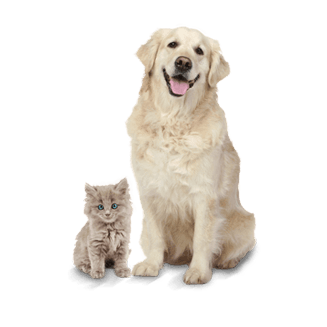 insurance-for-pets