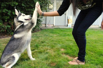 how to train your puppy basic commands