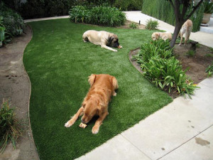 Artificial-Grass-for-Dogs