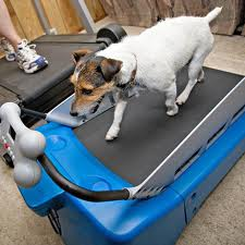 Dog-Treadmill
