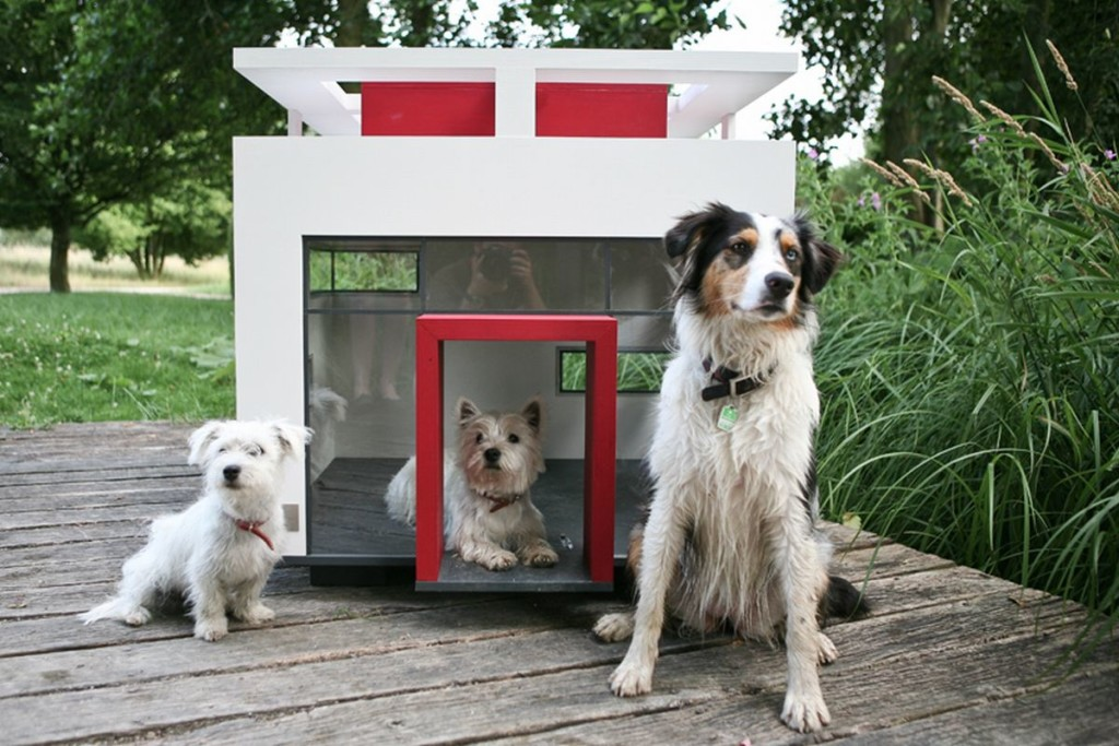 Dogs-for-Small-Homes