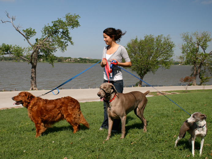 Hiring-Dog-Walking-Service-1