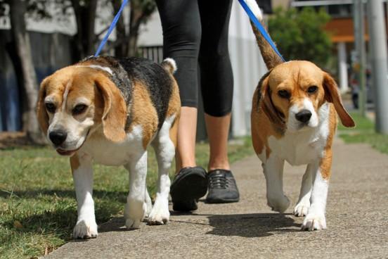 Hiring-Dog-Walking-Service-2
