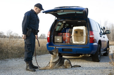 K9-Dog-Training