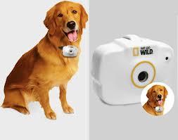 Pet-Companions-In-Camera