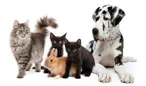 Pet-Sitting-Business