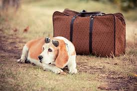 Travelling-with-dog