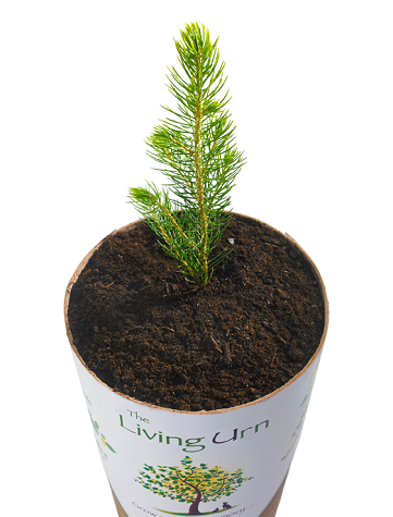 biodegradable-urn