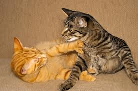cats-play