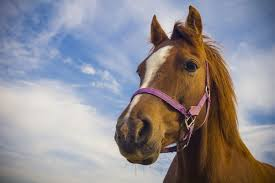 horse-health
