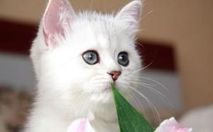 lol-cat