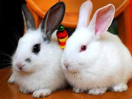 pet-rabbits