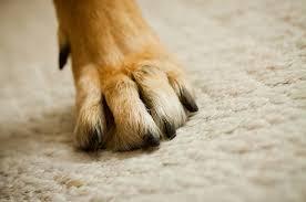 pet-stains-on-carpet
