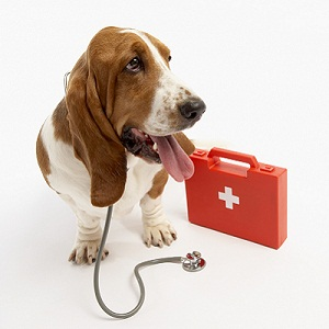Dog with first aid kit and stethoscope