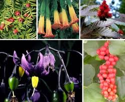 poisonous-plant-for-pets