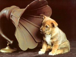 remarkable-dogs