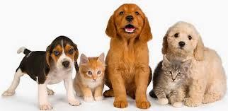 save-money-pets