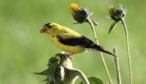 Bird Preservation