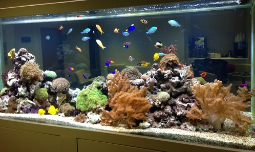 Tropical Fish Aquarium Tank