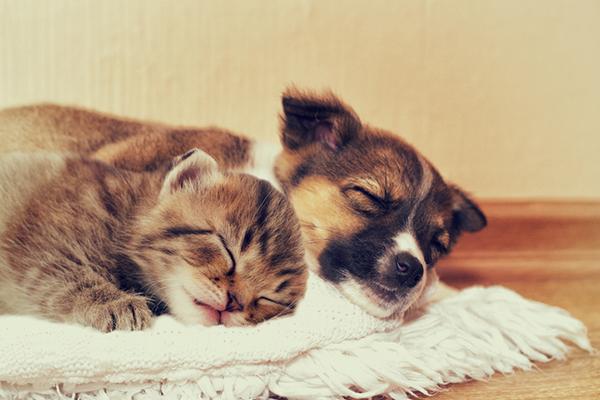 Pet Care Advice
