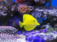 Healthy Home Aquarium